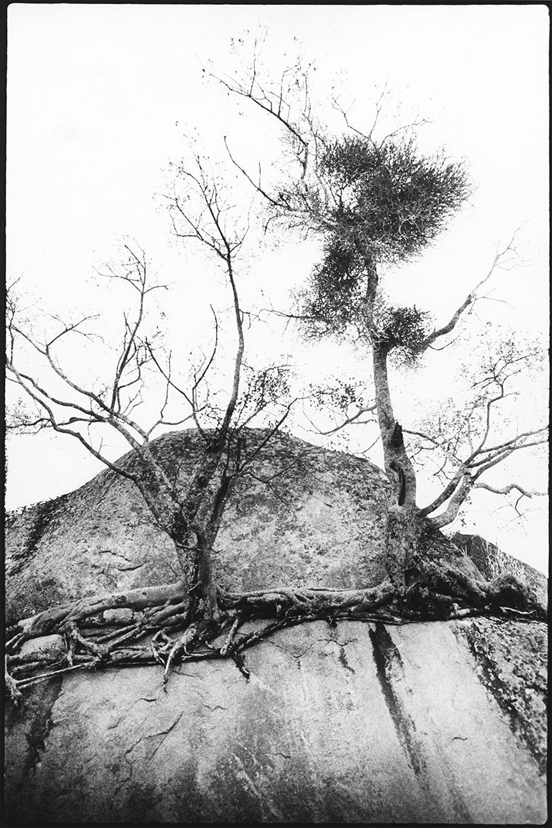 Rötterna och klippan