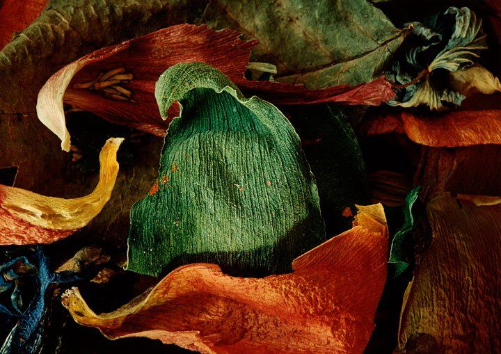 Det gröna bladet